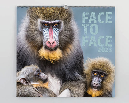 face to face with wildlifes most amazing animals